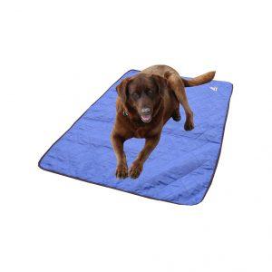 tapis chien bleu