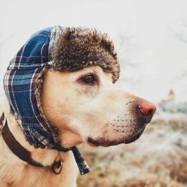 Mon chien a-t-il froid