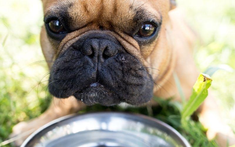 Les chiens doivent beaucoup boire quand il fait chaud