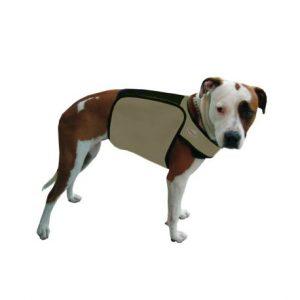 Manteau chien changement phase